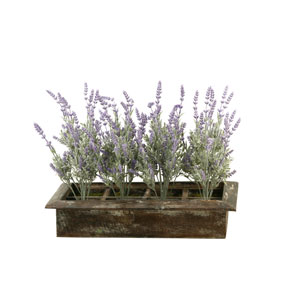 Lavender in Rectangle Wood Planter Box