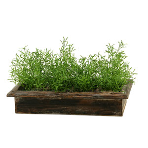 Wild Asparagus in Rectangle Wood Planter Box
