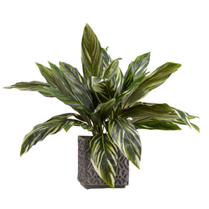 Large Green and White Dracaena in Square Concrete Planter