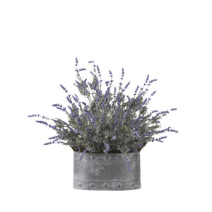 Lavender in Oval Metal Planter