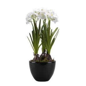 Paperwhite Bulbs in Round Ceramic Planter