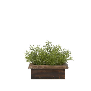 Wild Asparagus in Rectangle Wooden Planter