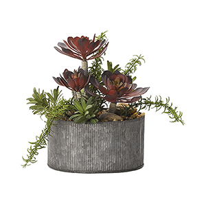 Frosted Red Aeonium and Rosemary in Round Tin Planter