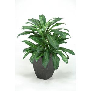 Birdnest Palm Plant in Square Metal Planter