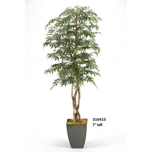 7 Ft. Japanese Maple Tree in Square Metal Planter