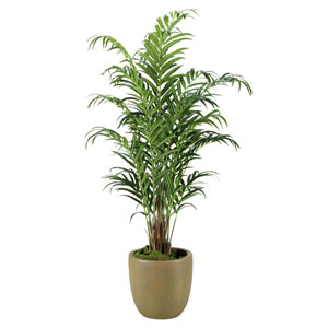 9 Ft. Kentia Palm in Round Resin Planter