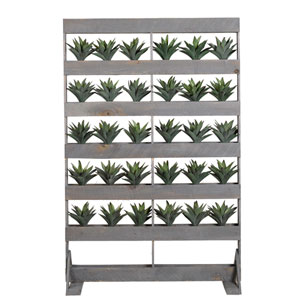 Stripped Agave in Wooden Screen with Shelves