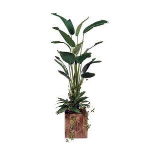 8 Ft. Bird of Paradise Tree in Square Wood Planter