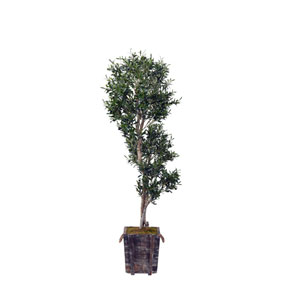 7 Ft. Sculptured Olive Tree in Rustic Wooden Planter