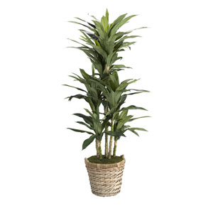 6.5 Ft. Dracaena Tree in Round Basket with Handles
