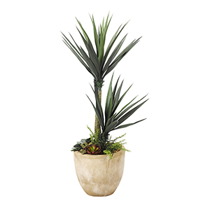 Aloe Plant with Succulent Underplanting in Round Planter