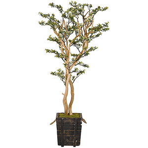 6.5 Ft. Green Budding Sedum Tree in Square Wooden Planter