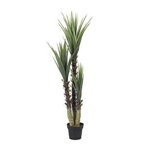61 In. Yucca Tree