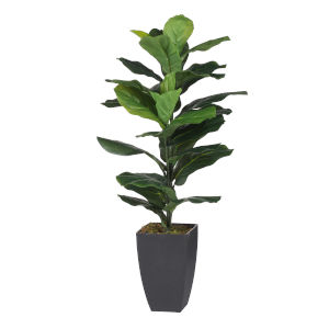 Green Potted Fiddle Leaf Fig Tree