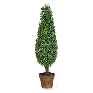 Green Boxwood Tree