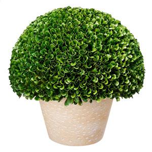 Green Topiary Bush