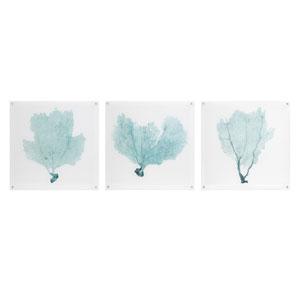 Sea Fan Acrylic Floating Wall Art, Set of 3