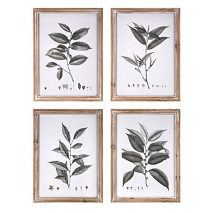 Aba Botanical Wall Décor, Set of Four