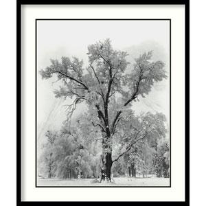 Oak Tree, Snowstorm, Yosemite National Park-1948 by Ansel Adams: 27 x 32-Inch Print Reproduction