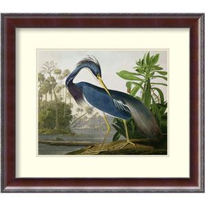 Louisiana Heron, from Birds of America, engraved by Robert Havell, 1834 by John James Audubon: 25 x 22-Inch Framed Art Print