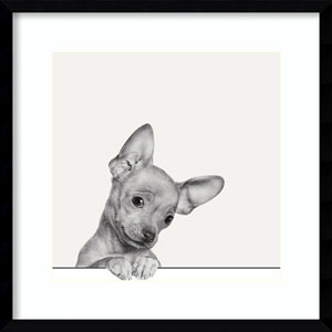 Sweet Chihuahua Dog by Jon Bertelli: 21 x 21-Inch Framed Art
