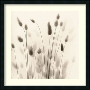 Italian Tall Grass No. 1 by Alan Blaustein: 26 x 26 Print Reproduction