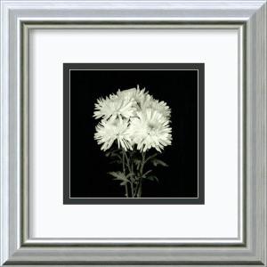 Flower Series IX by Walter Gritsik: 12 x 12 Framed Art Print