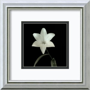 Flower Series VI by Walter Gritsik: 12 x 12 Framed Art Print
