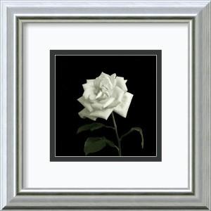 Flower Series VIII by Walter Gritsik: 12 x 12 Framed Art Print