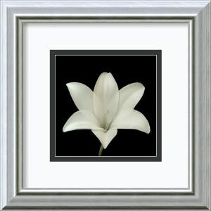 Flower Series VII by Walter Gritsik: 12 x 12 Framed Art Print