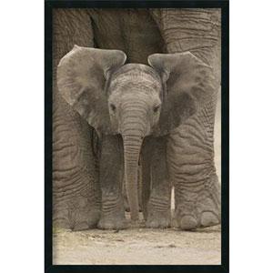 Big Ears - Baby Elephant: 25.4 x 37.4 Print Framed with Gel Coated Finish