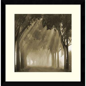Misty Grove by Steven Mitchell, 17 x 17 In. Framed Art Print