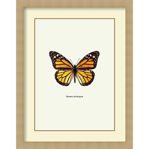 Yellow Butterfly by Graphinc, 29 In. x 37 In. Framed Art