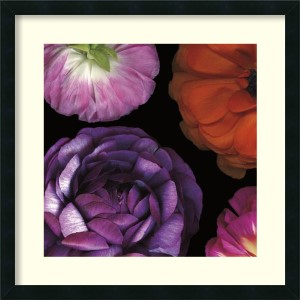 Ranunculus II - Left by Pip Bloomfield: 25 x 25 Print Reproduction