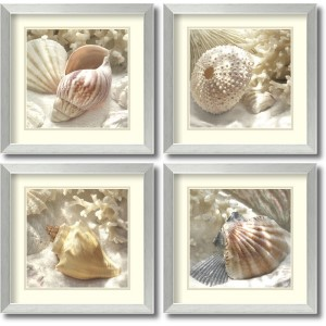 Coral Shell by Donna Geissler: 17.88 x 17.88 Print Reproduction, Set of Four