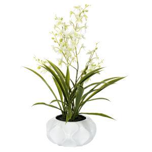 Green Orchid Floral Arrangement