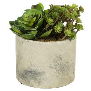 Green Succulent Arrangement