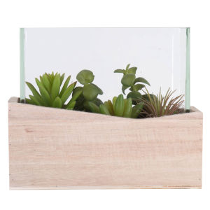 Green Assorted Succulents in Glass