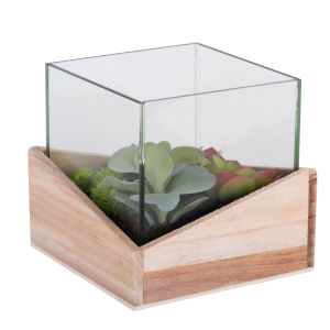Green Assorted Succulents in Glass and Wood