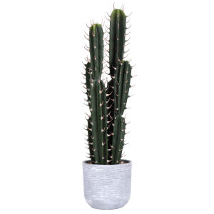 Green 28-Inch Cactus in Concrete Pot