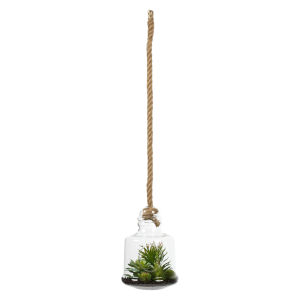 Green 10-Inch Assorted Succulents in Glass Jar