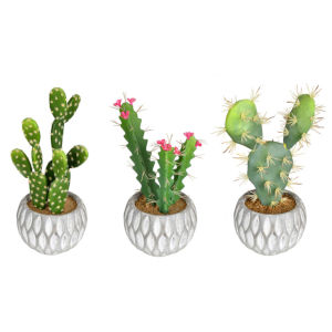 Green Cactus Assorted Potted, Set of 3
