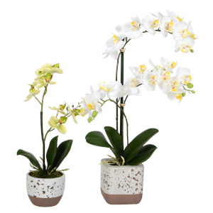 White Real Touch Phalaenopsis, Set of 2