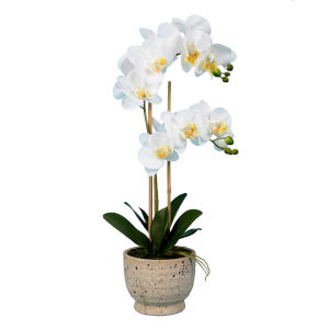 White Real Touch Phalaenopsis in Pot Real Touch