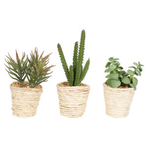 Green Assorted Potted Succulent Cactus, Set of 3