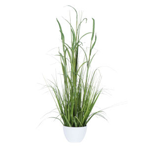 Green Potted Bamboo Grass