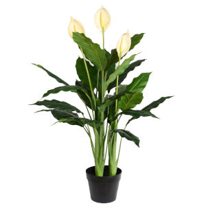 Green 37-Inch Peace Lily in Pot with 27 Leaves