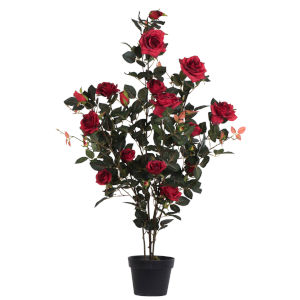Red 45-Inch Rose Plant in Pot