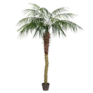 Green 6-Feet Potted Pheonix Palm Tree with 545 Leaves