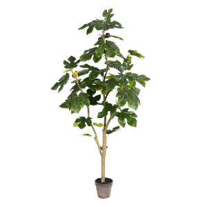 Green 4-Feet Potted Fig Tree with 45 Leaves